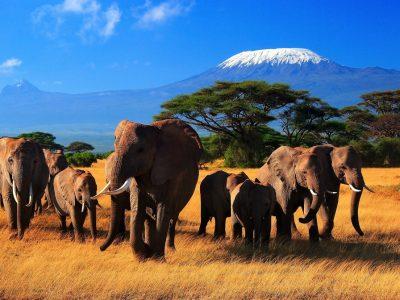 Кения_Слоны